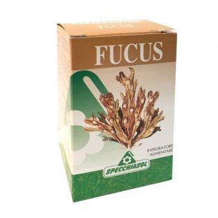 fucus compresse